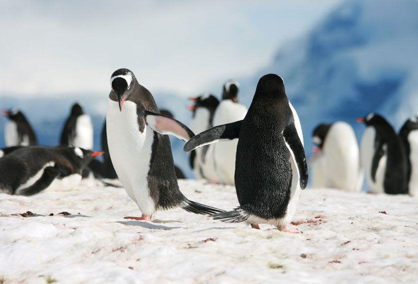 Classic Antarctica - Air-Cruise PUQ-USH<br />Classic Antarctica<br />in the M/V Greg Mortimer