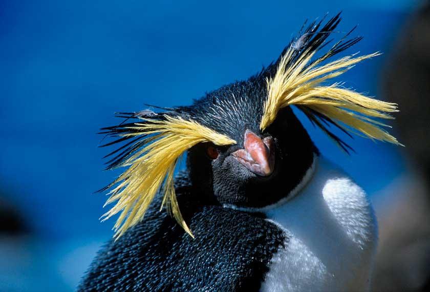 Classic Antarctica - Air-Cruise<br />Wildlife (USH-PUQ)<br />in the M/V Sylvia Earle