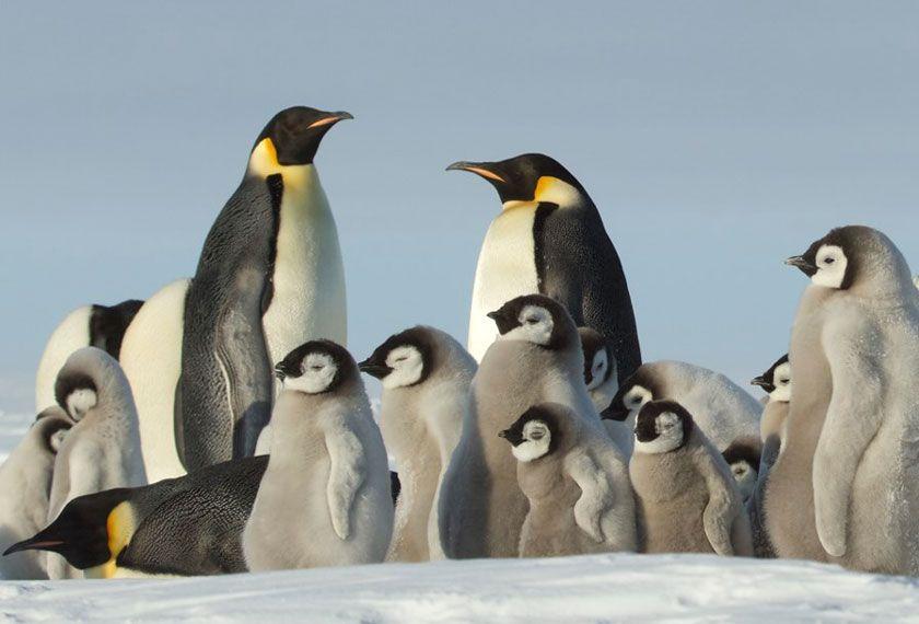 Aero-croisière - Aéro-Croisière <br />Antarctique Express