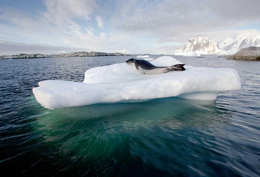Îles Subantarticques - Antarctique et Îles Subantarticques<br />dans le M/V Greg Mortimer