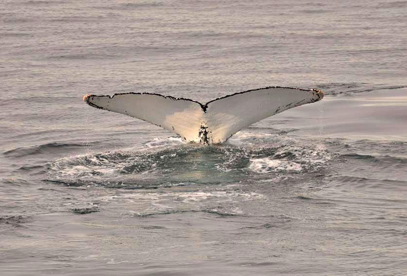 Aéro-croisière Antarctique Classique sur le M/V Greg Mortimer - M/V Sylvia Earle