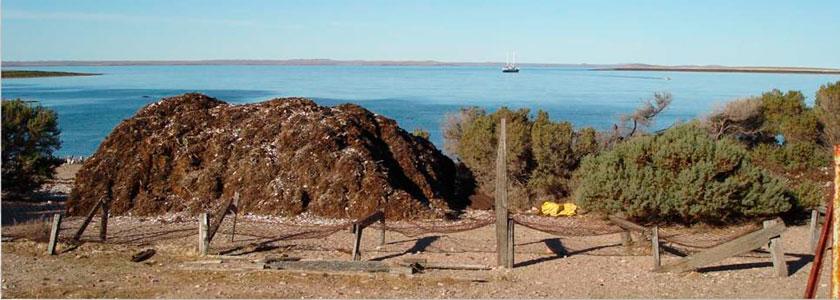 Seetanggewinnung in Bahía Bustamante