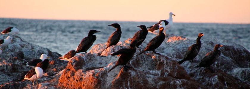 Vogelbeobachtung in der Bustamante Bay