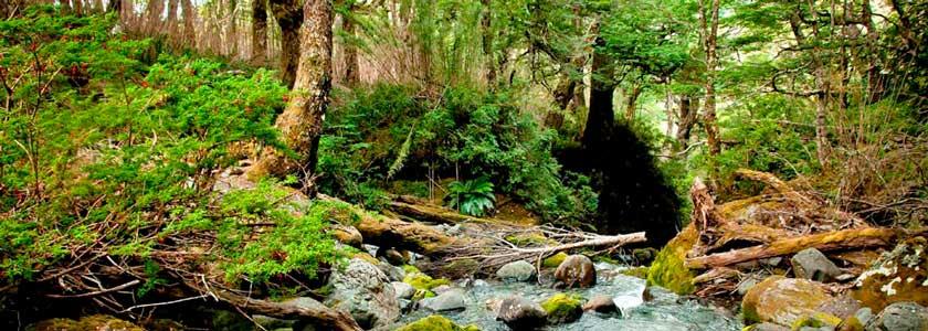 Valdivian Dschungel
