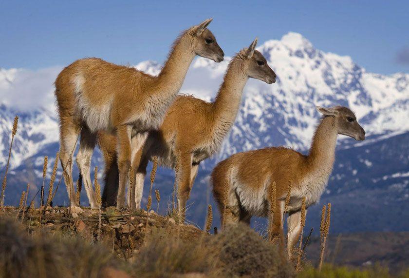 Parc National Los Alerces et Bariloche en 7 Jours